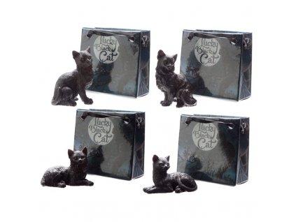 kočka černá pro štěstí 4