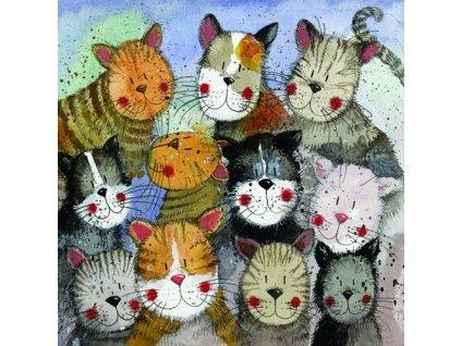 přání kočka kočky kočičí kotě Alex Clark blahopřání