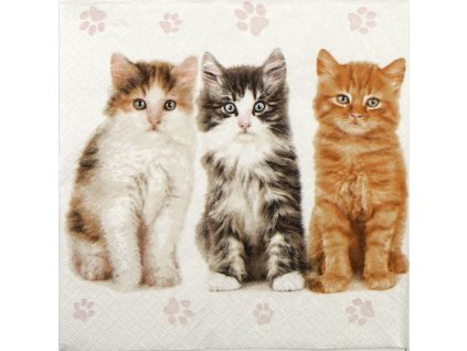 ubrousky kočka s kočkou kočičí kotě s kotětem 2