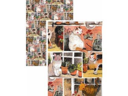 balící papír kočka s kočkou kočičí alex clark čtverce