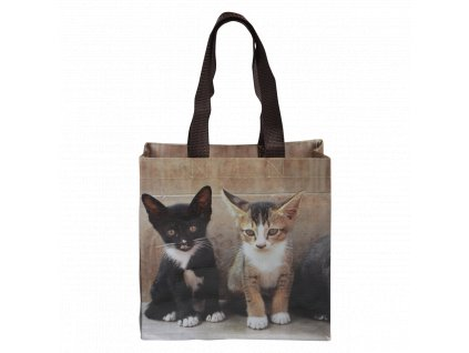 kotě kočka taška s kočkou kočičí mačka mačiatko s mačkou