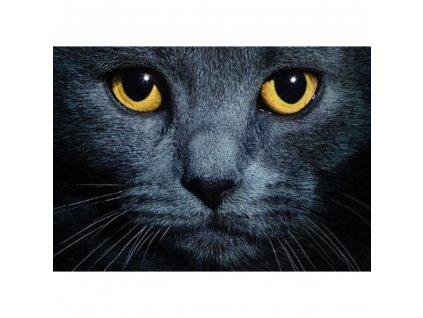 prostírání kočka s kočkou kočičí černé