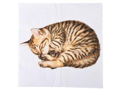 ubrousek kočka s kočkou kočičí kotě