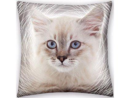 polštář kočka s kočkou kočičí bílá modrooká