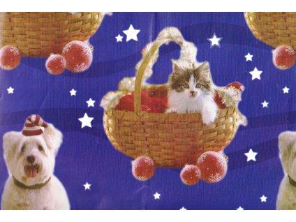balicí papír bánoční kočka kotě kočičí