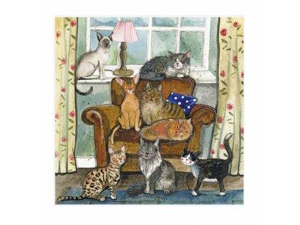 blahopřání přání kočka s kočkou kočičí domov Alex Clark