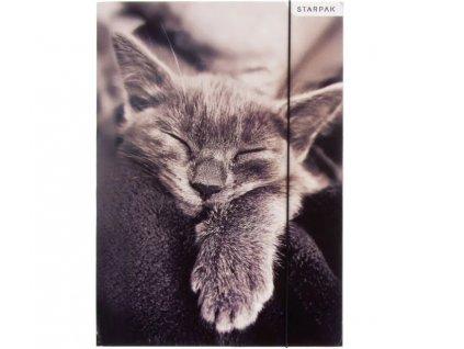 desky šanon kočka s kočkou kočičí kotě spící