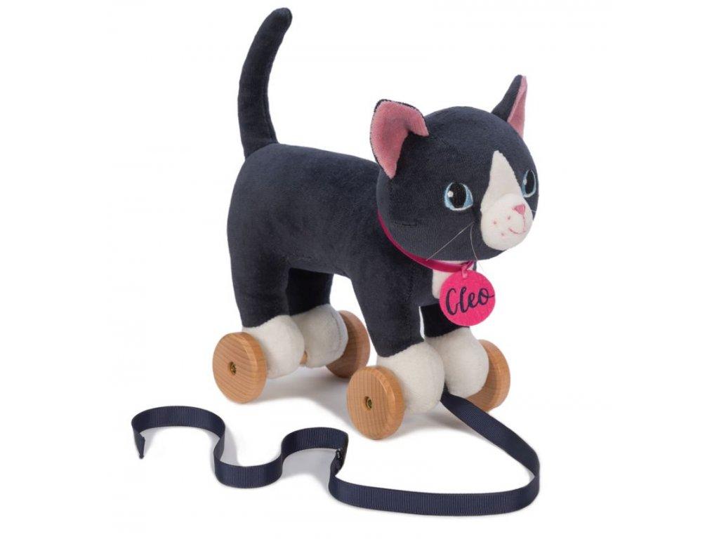 pravá mačička pekná mačička a zadok obrázky