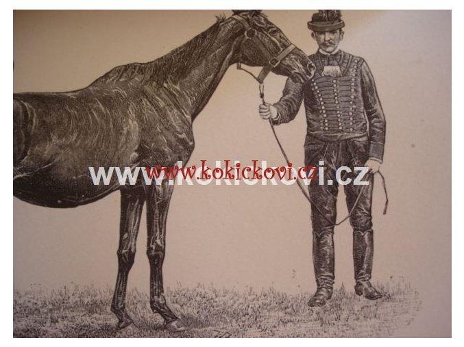 Ungarns Pferdezucht in Wort und Bild von Graf C. G. Wrangel 1895