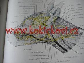 Veterinární anatomie II koně, psi ovce veterinářství