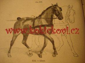 PODKOVÁŘSTVÍ 1920 PÉČE O KOPYTA A PAZNEHTY HANSLIAN