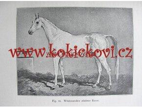 PLEMENA KOŇŮ DIE RASSEN DES PFERDES 1908 NĚMECKY
