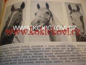 SPECIÁLNÍ ZOOTECHNIKA 2 ROK 1955 starokladrubský kůň aj.