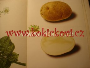 Průmyslové brambory – odrůdy pěstování brambor škrob