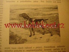 ČESKÁ MYSLIVOST SVÁZANÉ 3 ROČNÍKY 1911 1912 1913 kynologie