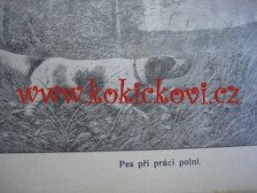 Chov a výcvik ušlechtilých psů loveckých Praha 1909