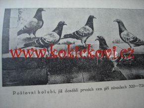 Chov holubů pro užitek i pro sport 1924 holubářství