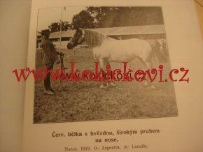 Aklimatizace a akomodace chladnokrevného koně v Čechách 1924