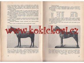 Studie stavby těla jezdeckého koně -  LECHNER 1931