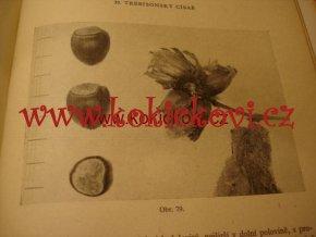Líska a její pěstování - druhy ořechů 1957