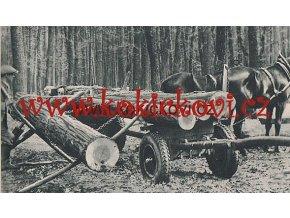 Jakostní dříví - tvorba a těžba 1946 - lesní hospodářství