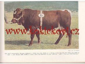 Chov hovädzieho dobytka 1959 - barevné fotografie nízký náklad