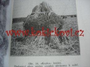 PĚSTOVÁNÍ KMÍNU - VÁCLAV HAVELKA 1927