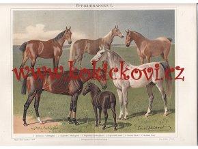 PLEMENA KONÍ I - LITOGRAFIE Z OBDOBÍ 1894-97 - VIZ POPISEK
