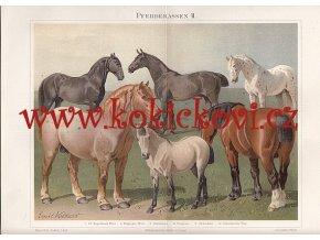 PLEMENA KONÍ II - LITOGRAFIE Z OBDOBÍ 1894-97 - VIZ POPISEK