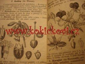 1873 Rostlinopis - botanika - malý formát stromy keře