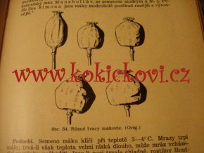 PĚSTOVNÁNÍ OLEJNIN - 1935 - ŘEPKA - HOŘČICE - MÁK - SOJA - SLUNEČNICE - LEN
