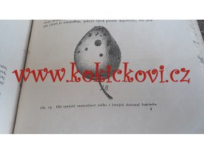 Časopis českého ovocnictví 1892 1. zakládající ročník svazek 1  - 196 stran