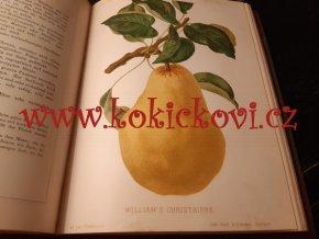Pomologie des Praktischen Obstbaumzüchters - Gaucher Nicolas 1894 - 102 chromolitografických tabulí - perla z konce 19. století