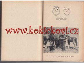 CHOV KONĚ ČELNÁ PLEMENA RARITA 1954 Dr. Fr. Bílek