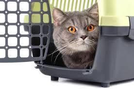 Přepravky pro kočky