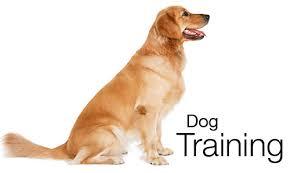 Výcvik