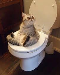 Toalety a stelivo do wc pro kočky