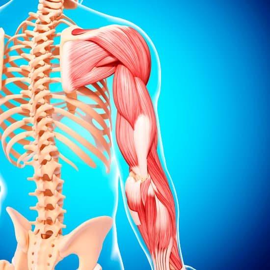 Koľko kolagénu je v jednotlivých častiach tela