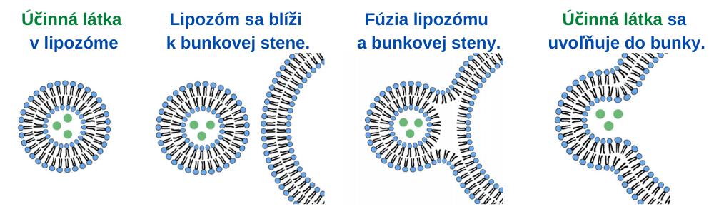 _kolagendrink.sk Liposomal - how it works