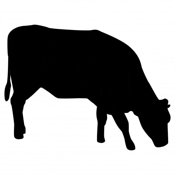bovine_1