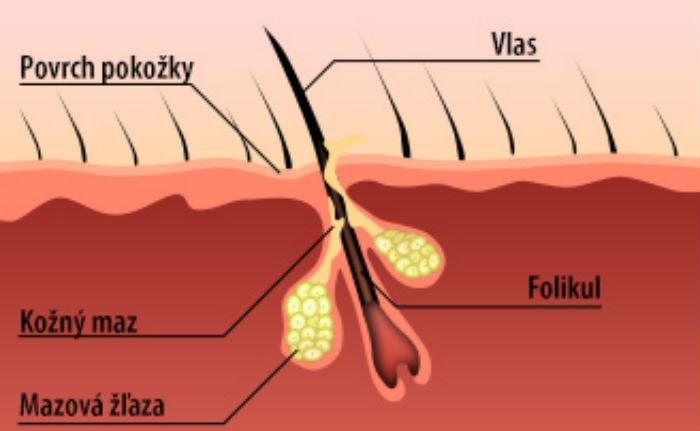 vlasove-folikuly-kolagendrink
