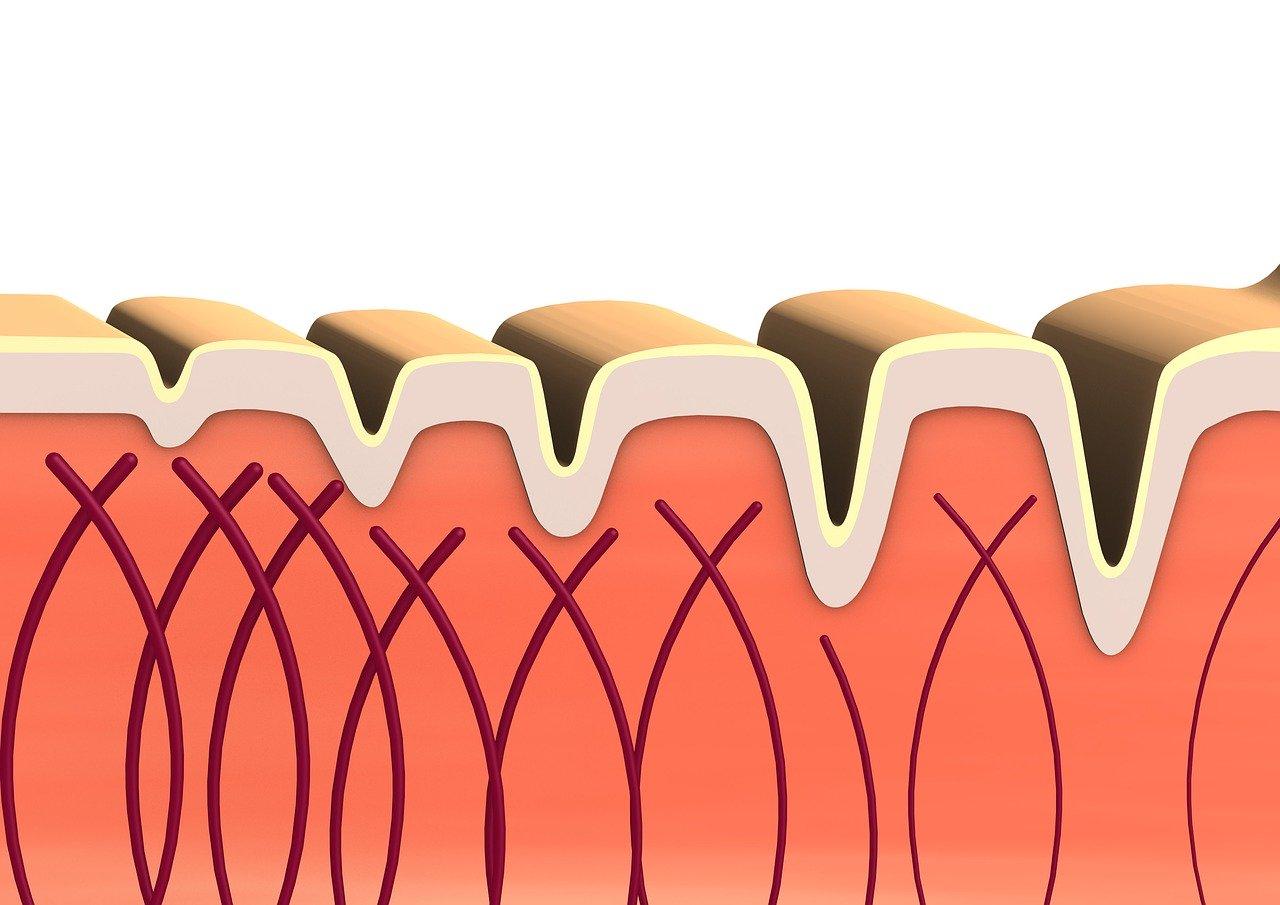 Veľký článok o kolagéne - čo je kolagén z pohľadu vedy