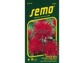 kvetiny letnicky astra cinska electric cervena