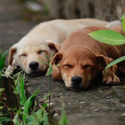 CBD konopný olej pro psy