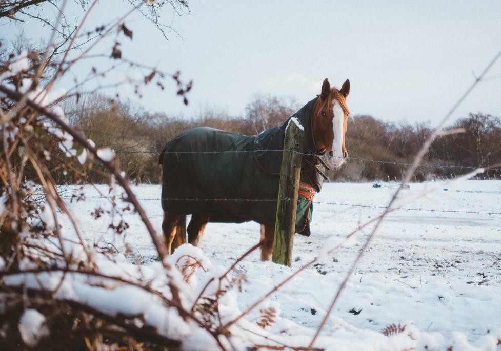 Koně v zimě