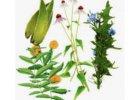 Krmiva s bylinkami
