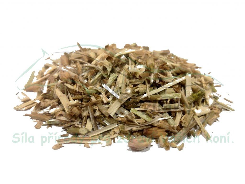 Čekanka (nať) Cichorium herba 1kg