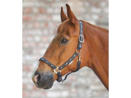 ohlavka koně