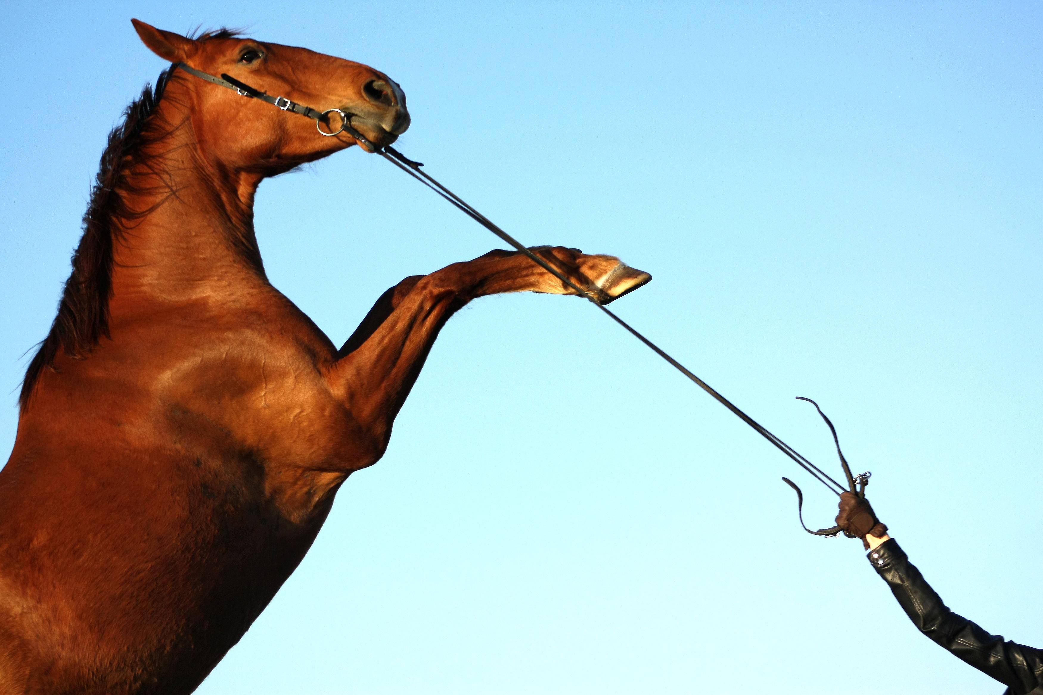 Výcvik koně bez trestů? Podle Rachaël Draaisma to jde