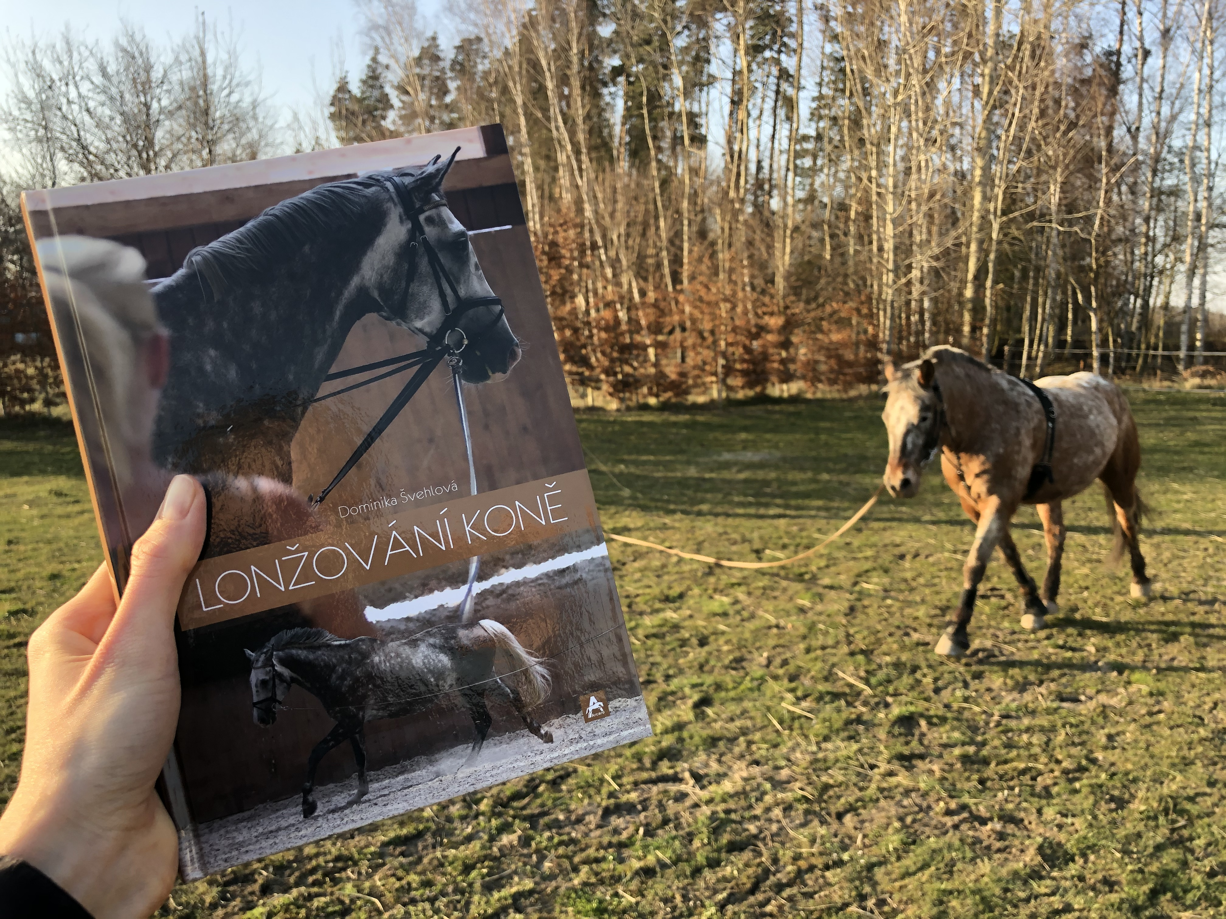 RECENZE: Lonžování koně